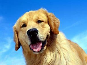 dog licenses information
